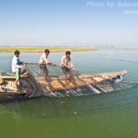 Fishing by Seine net, Thapna beel, Sunamganj
