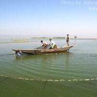 Fishing with Seine net, Thapna beel, Tahirpur, Sunamganj