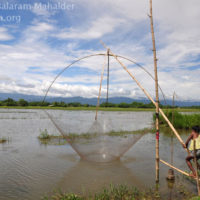 Fishing by small lift net, Bishwambharpur, Sunamganj