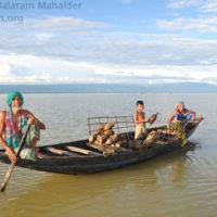 Fishing with trap in Matian haor, Sunamganj