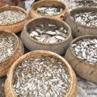 Harvested fish, Jur beel, Bishwambharpur, Sunamganj