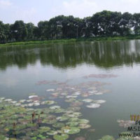 Brood rearing pond for hatchery of BAU FF