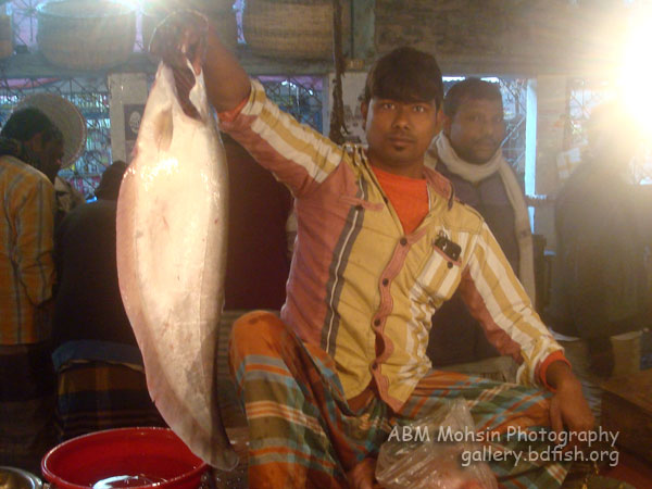 Shaheb Bazar Fish Market, Rajshahi: a morning