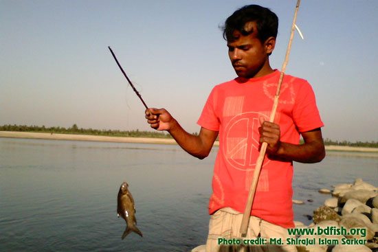 Fishing in Dharla river at Kurigram