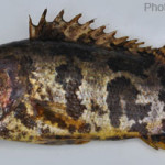 Fishes of Sunamganj Haor Area, Episode 5