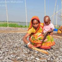 Drying of fish, Bishwambharpur, Sunamganj