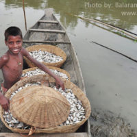 Fisher boy with harvested fish, Sunamganj