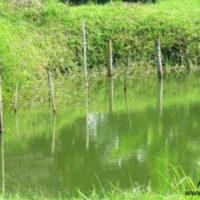 Research Pond, Department of Aquaculture, FF, BAU