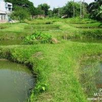 Experimental Ponds of BAU FF