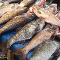বিদেশী মাছ দখল করে আছে মেলার একটা বড় অংশ