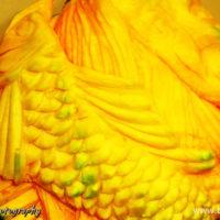 কাঁচা মিষ্টিকুমড়ার উপর carving করা মাছ ও মানুষের মুখ