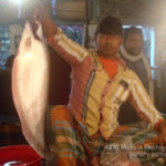 Shaheb Bazar Fish Market, Rajshahi: a morning