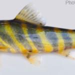 Fishes of Sunamganj Haor Area, Episode 1